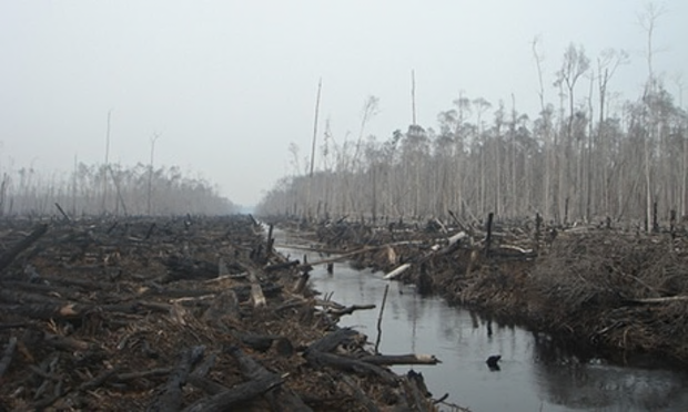 The effects of logging in an Indonesian forest