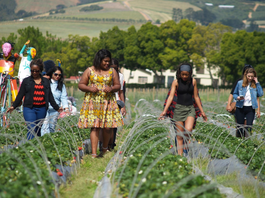 Gap Year : Stellenbosch strawberry farm